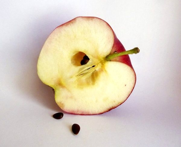 هشدار؛ خوردن دانه این میوه خطرناک است