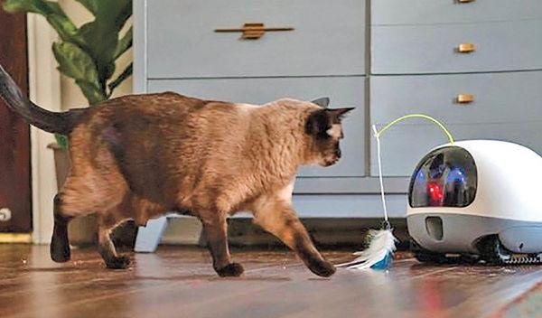 روباتی که همبازی حیوانات خانگی است