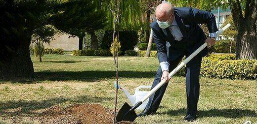 قالیباف هم یک درخت کاشت +عکس