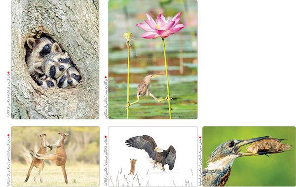 رقابت خندهدارترین عکسهای حیوانات