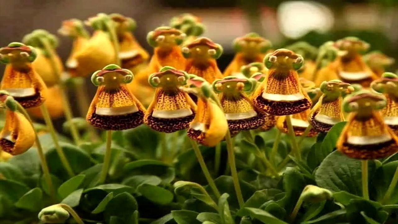 عجیبترین گلها در سراسر جهان + تصاویر