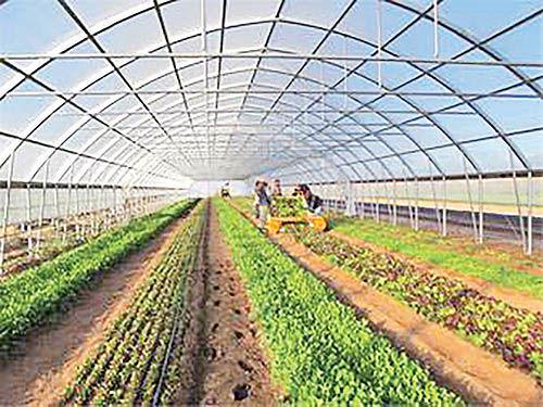 لزوم حمایت طرح توسعه گلخانهها