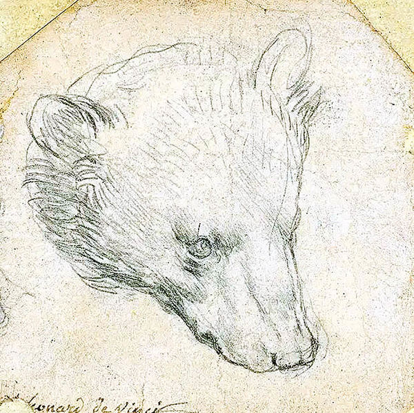 خرس ۱۷ میلیون دلاری داوینچی