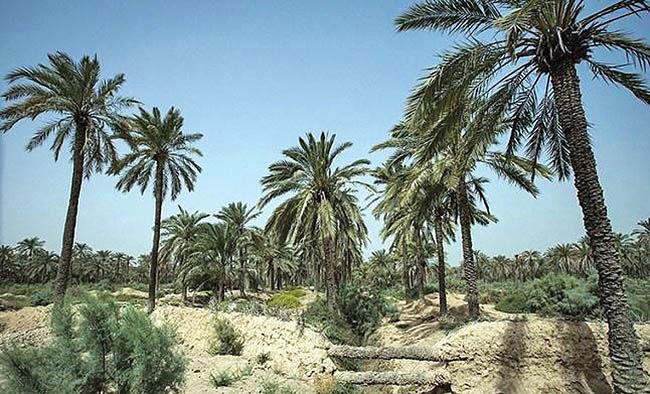 رتبه نخست خشکسالی برای خوزستان