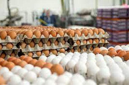 قیمت هر شانه تخم مرغ به 60 هزار تومان رسید
