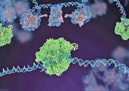 افزایش کاربرد آنزیمها در زندگی انسان