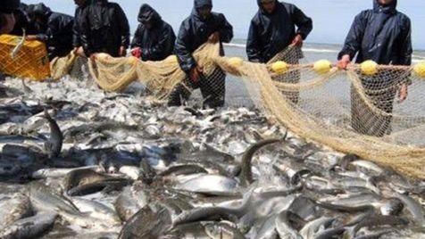 قیمت ماهی قزلآلا به چقدر رسید؟