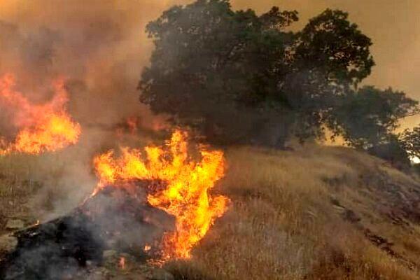 وقوع آتش سوزی عظیم در جنگلهای کردستان