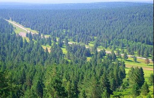هشدار هواشناسی درباره احتمال آتشسوزی در جنگلهای گیلان