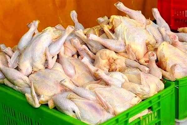 قول محمد مخبر در مورد مرغ! + فیلم