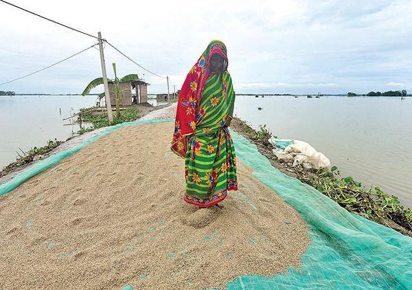 انسداد مسیر صادرات برنج در هند و تایلند