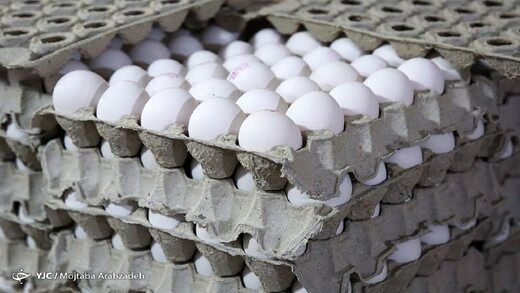 علت اصلی گرانی تخم مرغ در خرده فروشی