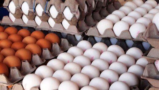 تخم مرغ دانهای چقدر شد؟