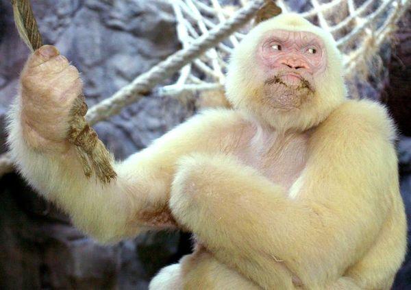 تصاویری دیدنی از نادرترین حیوانات مبتلا به زالی