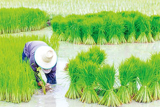 ابزارمحور شدن بازار کشاورزی