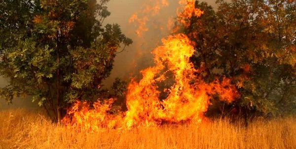 تداوم آتش سوزی در ارتفاعات کوه پهن گچساران