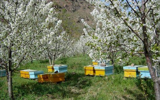 یک حقیقت تلخ از عسل شیرین/ تحولی که ماده شفابخش را به سم کشنده تبدیل کرده است