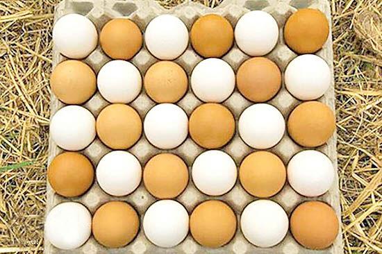 ابلاغ دستورالعمل   درج قیمت روی دانههای تخممرغ