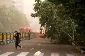 وزش باد شدید در تهران و سقوط درختان+ تصاویر