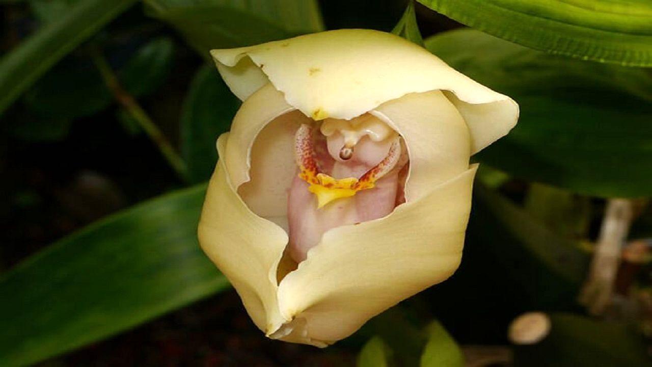 عجیبترین گلها در سراسر جهان