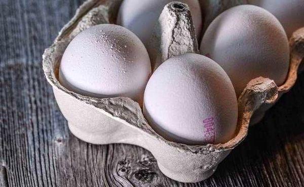 گلایه دبیر انجمن تولیدکنندگان تخم مرغ از مسوولان مربوطه