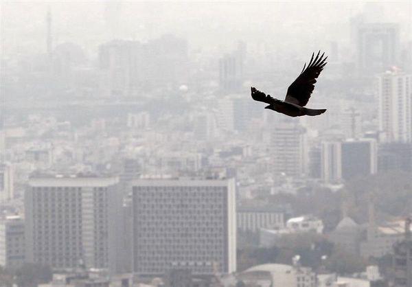 شیب ملایم افزایش نرخ اجارهبها در تهران