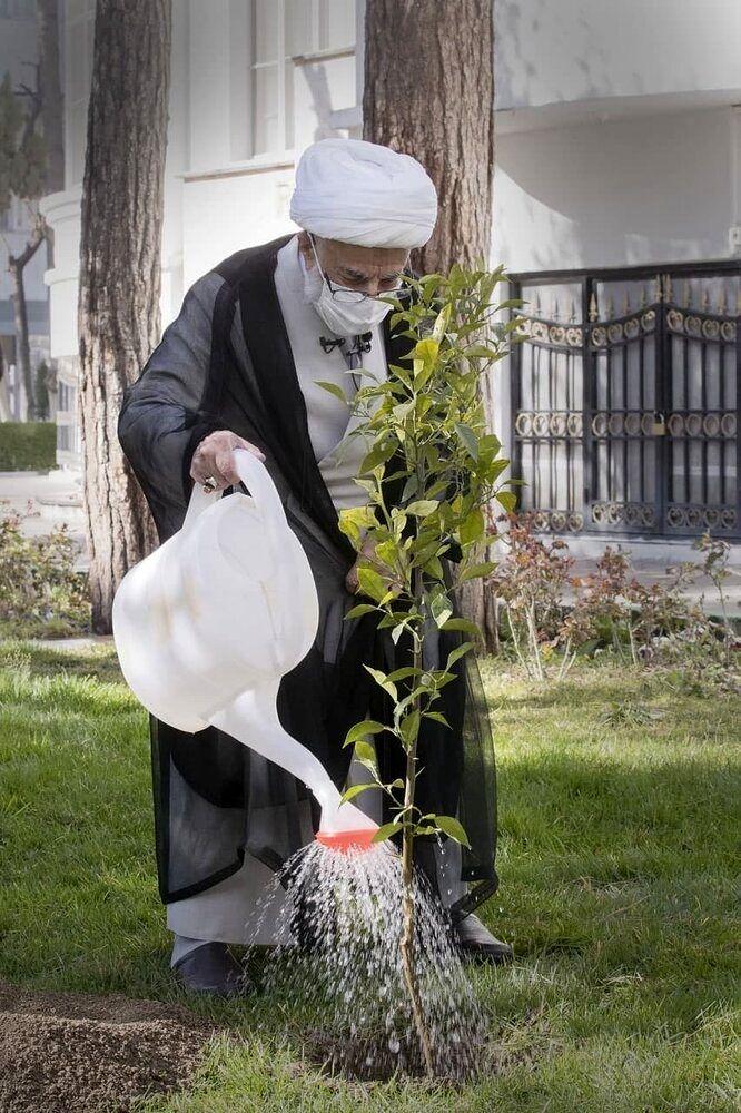 عکسی از درختکاری آیت الله جنتی در حیاط شورای نگهبان