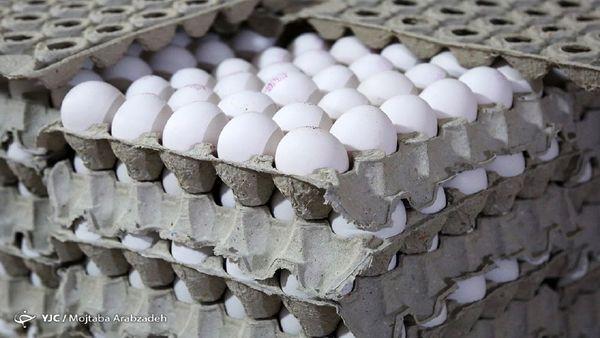 قیمت واقعی هر کیلو تخممرغ چقدر است؟